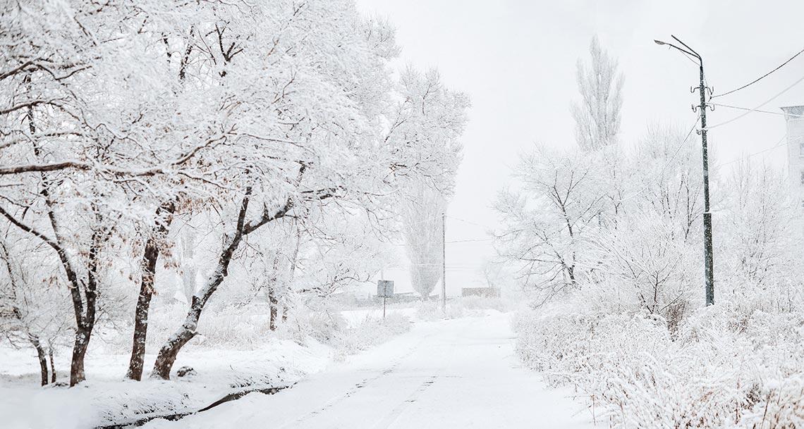Снегопад в Приморье 2019 года создал красивую снежную сказку