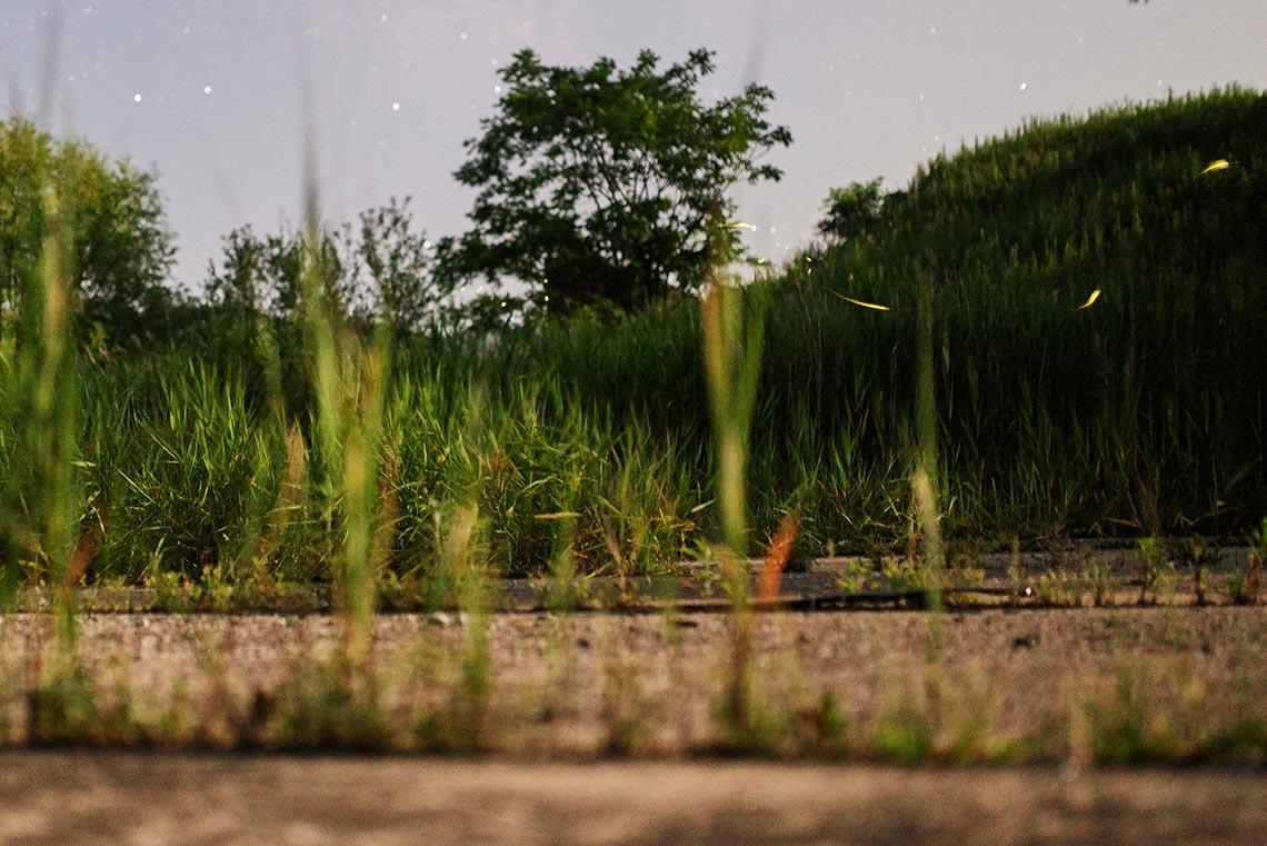 Полёт светлячков в Приморье рядом с ангаром в Золотой Долине