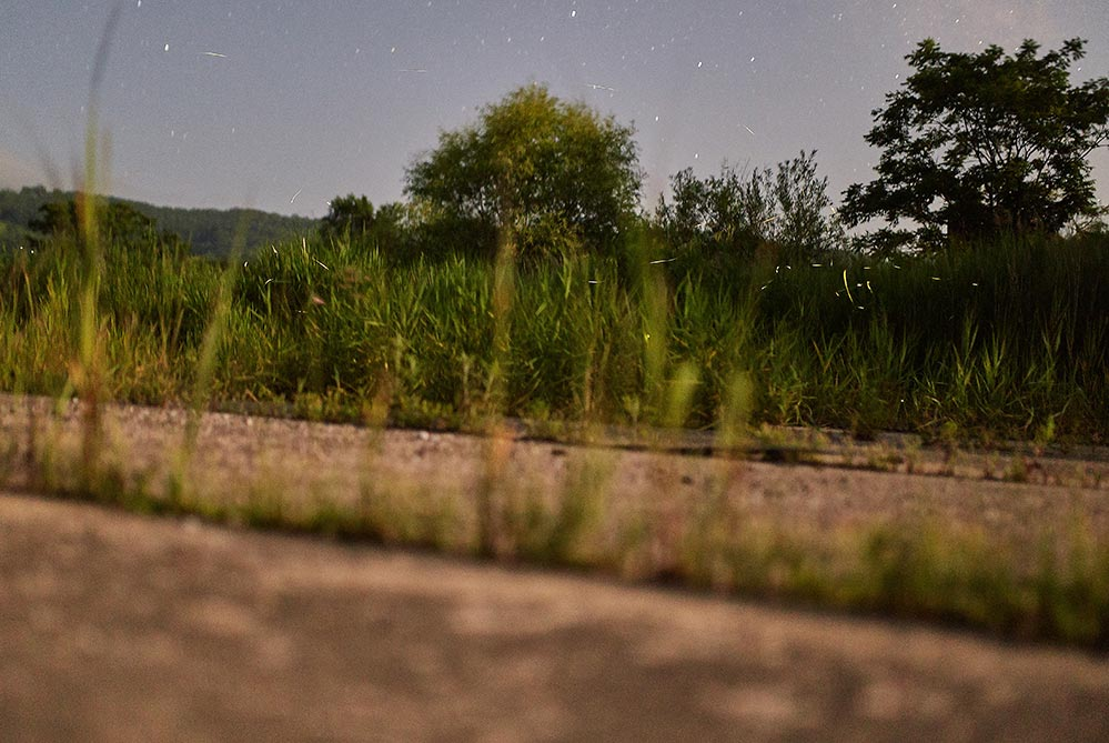 фотографияполёта светлячков в Золотой Долине с земли