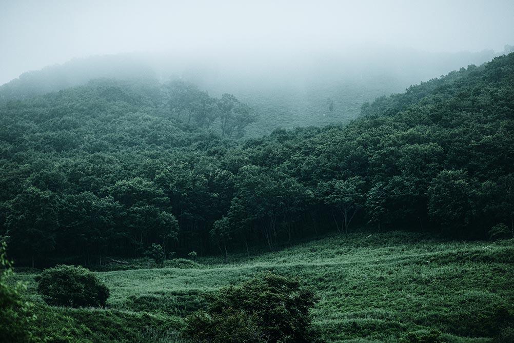 Мрачный лес укутан туманом