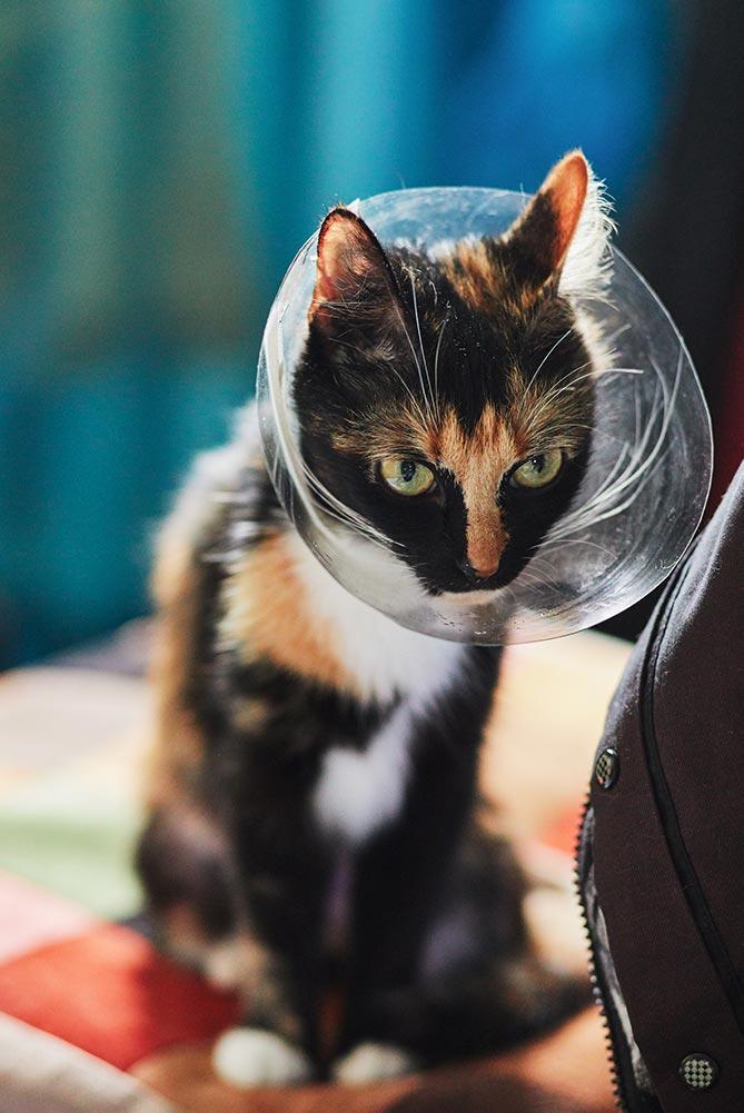Фотография кошки на Canon 5D Mark 4 (5000 ISO)