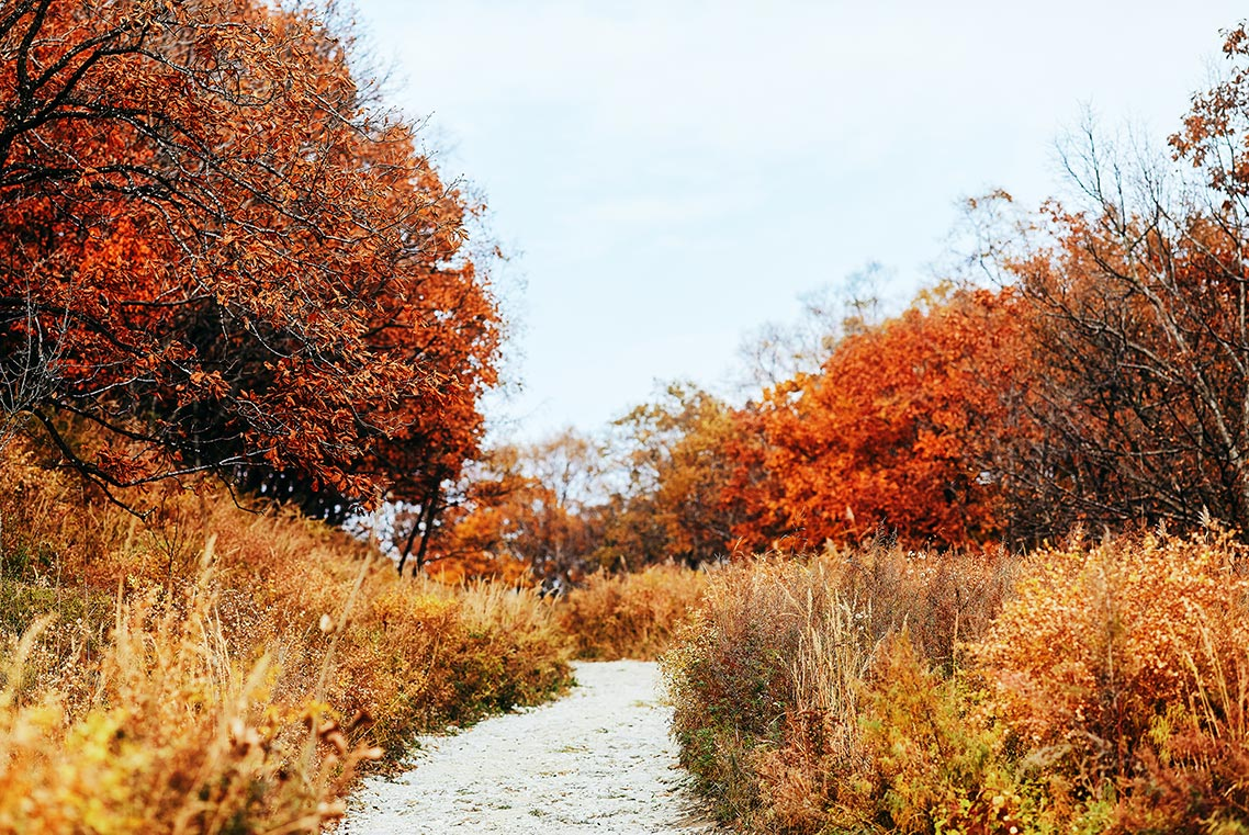 Дорога посреди осеннего леса на горе Брат