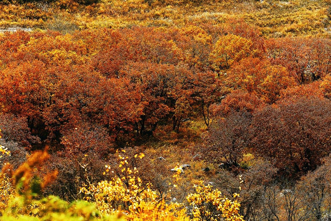 Осенний лес в Приморье (гора Брат)