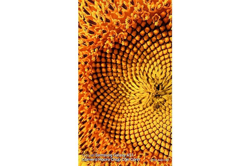 Пример макро фото цветка на Samsung Galaxy A51