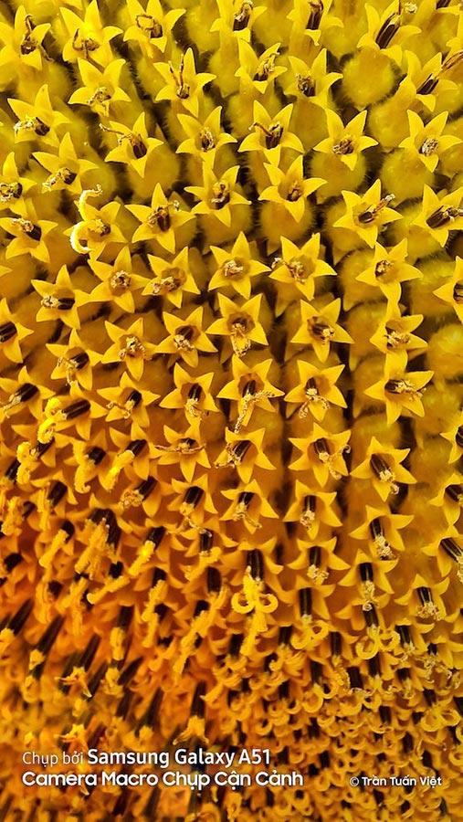 Съёмка макро на Самсунг - пример фотографии жёлтого цветка крупным планом
