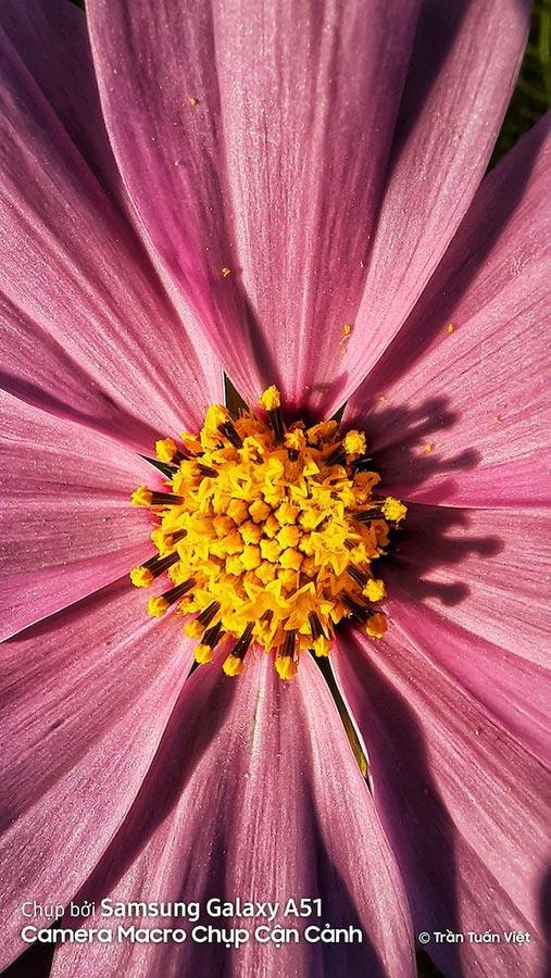 Макро на гэлакси а51, фото цветка