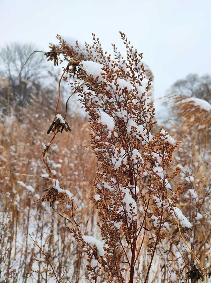 Фото травы со снегом на смартфон Realme XT, съёмка на 64-мегапиксельную камеру