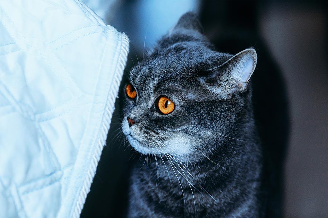 Чем личный сайт или фотоблог лучше Instagram в 2020 году? Статья + фото британского котика с яркими оранжевыми глазами. Автор снимка Tengyart