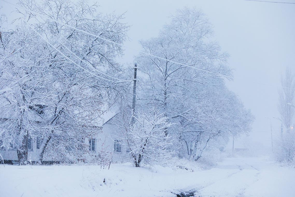 Деревья в снегу - HD фотография сельского зимнего пейзажа