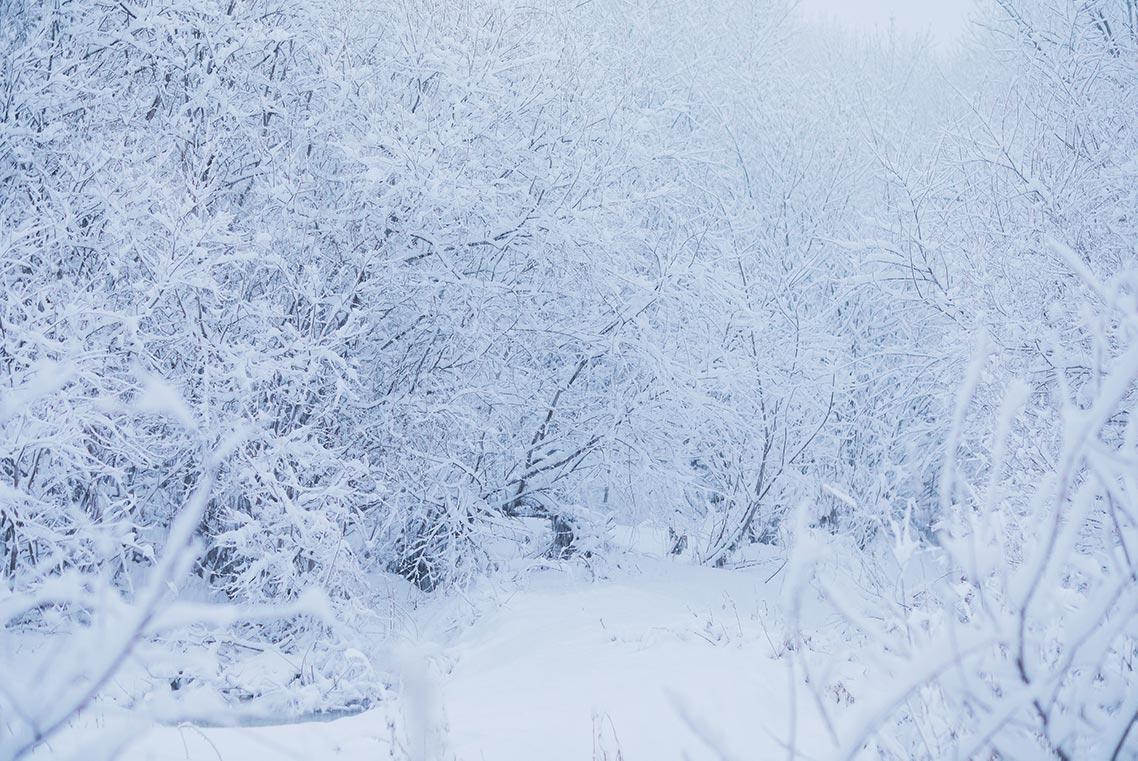 Приморский лес в белой пелене, красивая фотография зимнего леса бесплатно