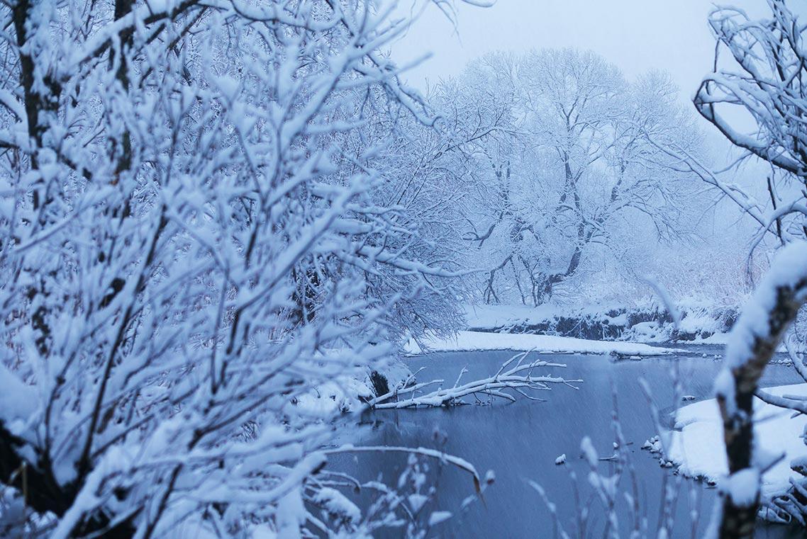 Снежные пейзажи Приморья - мрачный зимний лес фото в голубых и белых тонах