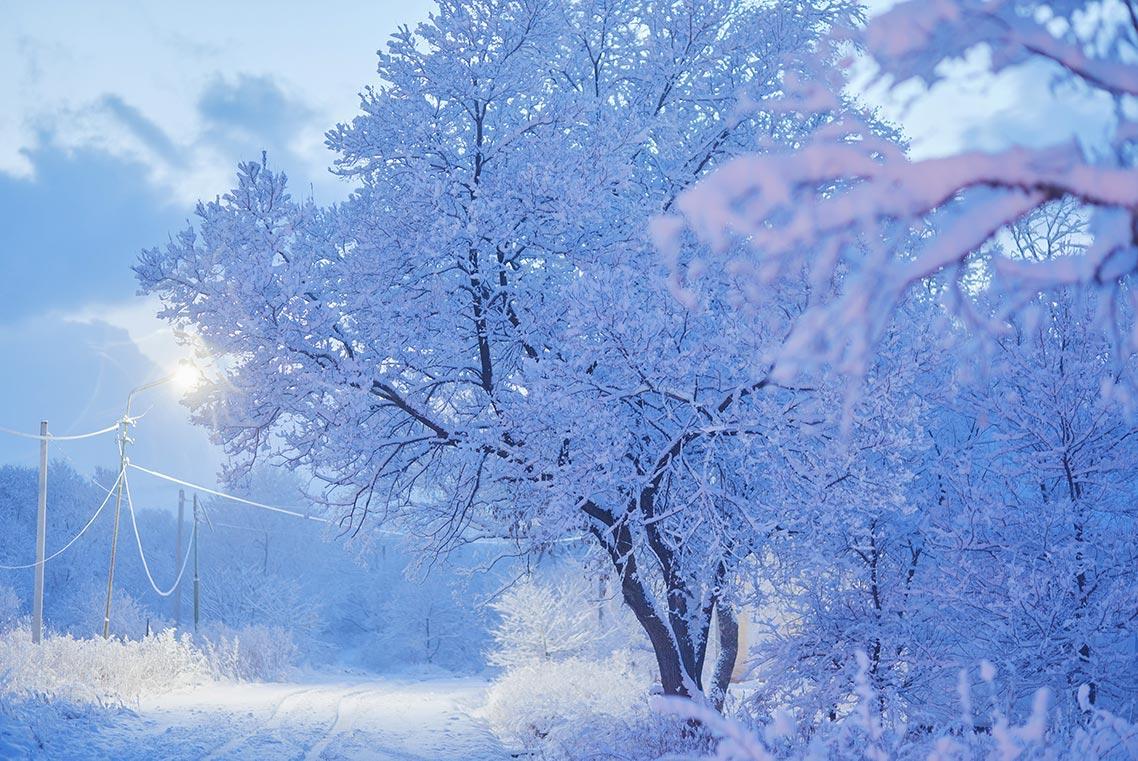 Фотография раскидистого белого дерева в снегу от Tengyart | Красивый зимний пейзаж, Приморье 2020