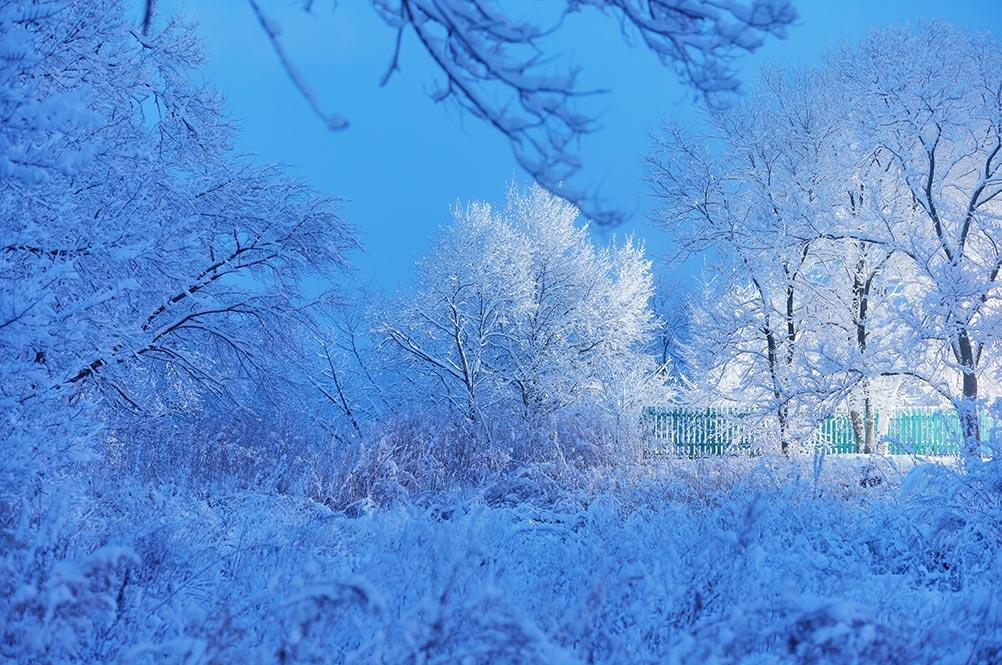 зимний лес, фото в селе Золотая Долина |  сказочный зимний пейзаж - бесплатная картинка с видами Приморья, фотограф Tengyart