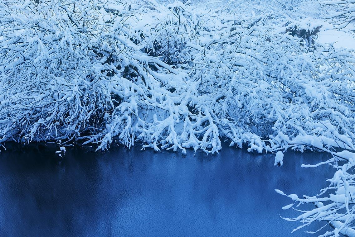 снежные пейзажи Приморья - зимняя фотография с деревом, нависающим над ярко-синей водой