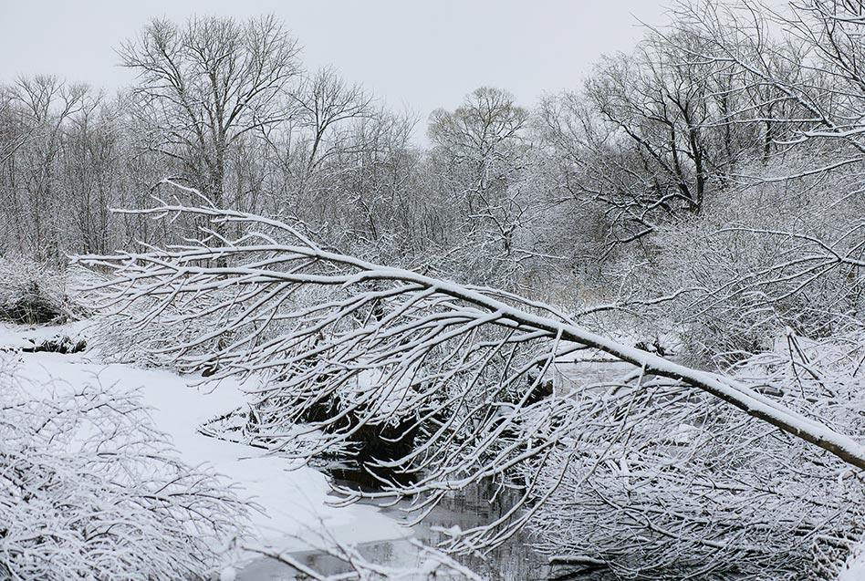 HD фото зимнего леса после бури в Приморье, усыпанного снегом