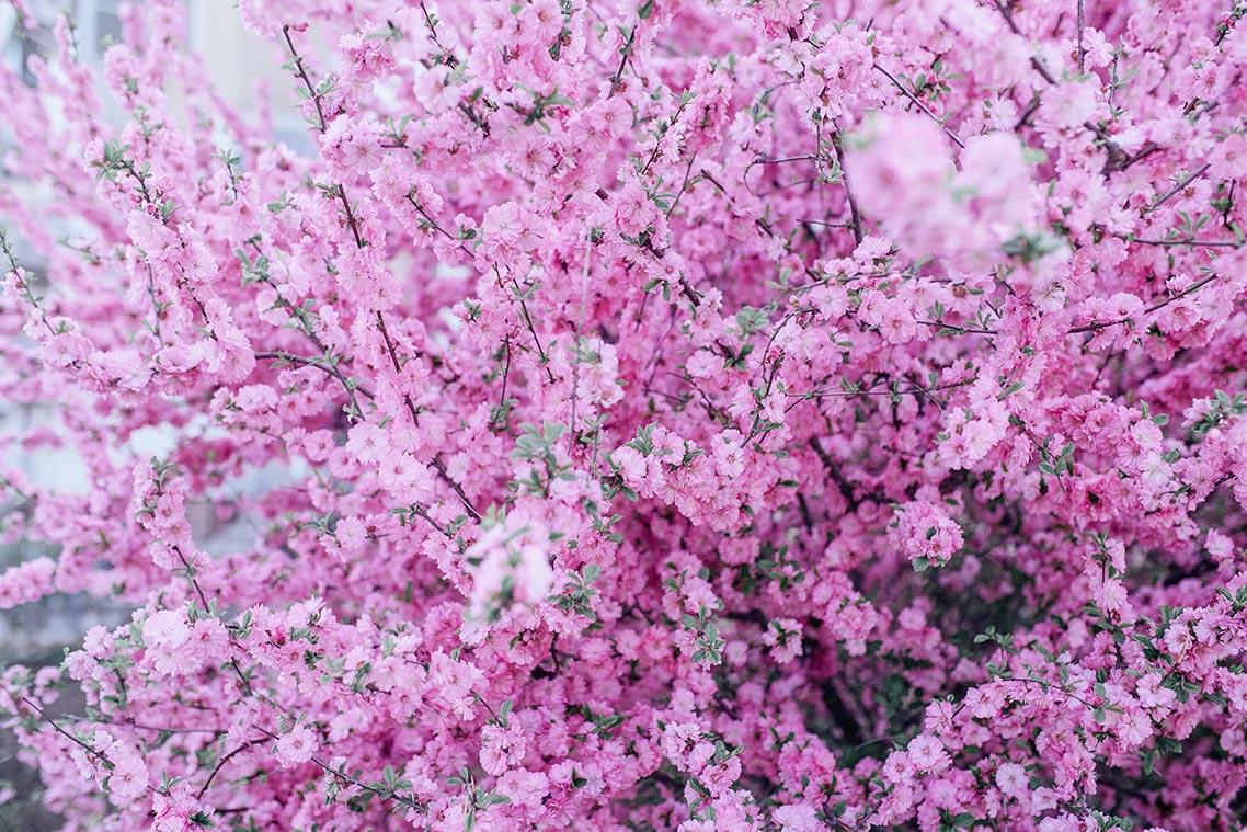 Красивые цветы на заставку смартфона (бесплатная подборка от Tengyart)