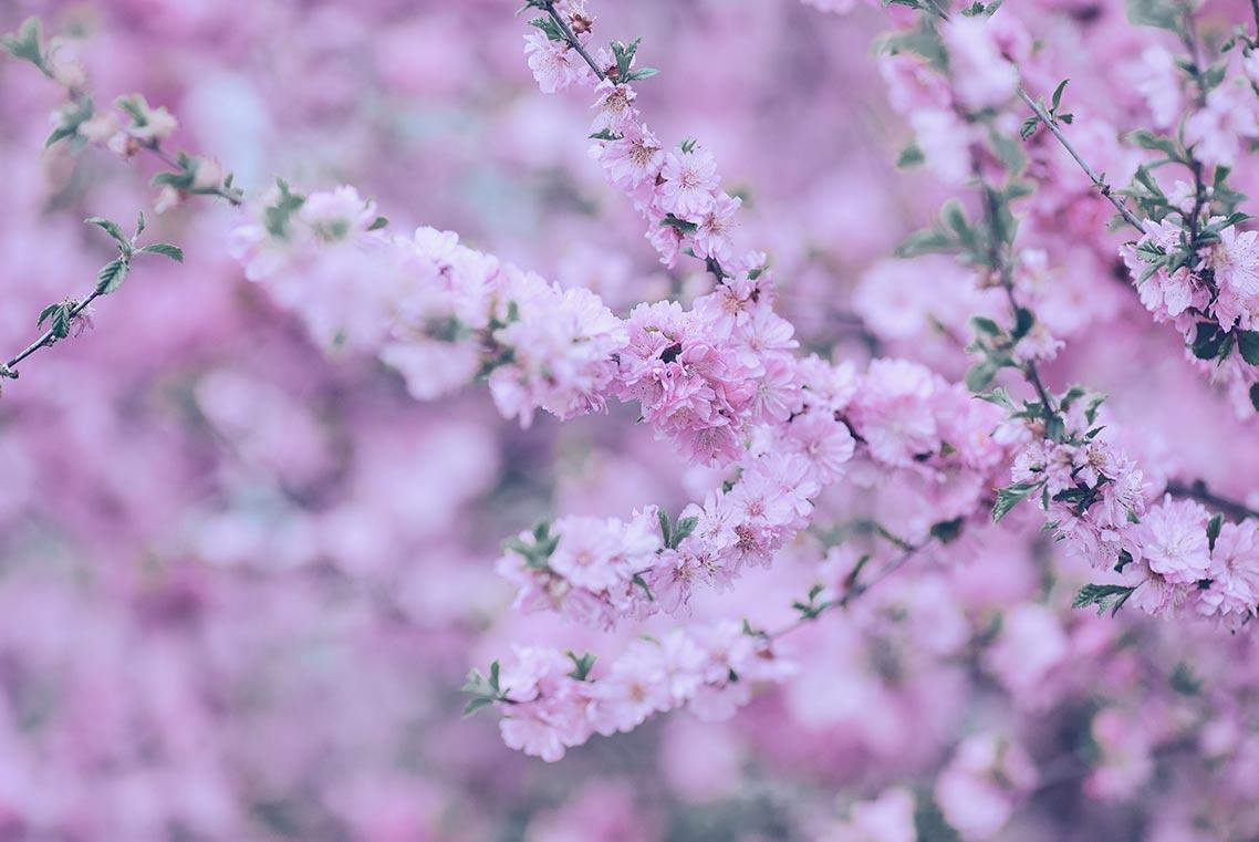 Купить стили Capture One для цветочных фотосессий и портретов за 2 доллара (пример кадра с цветами и пресетом Flowers Standart)
