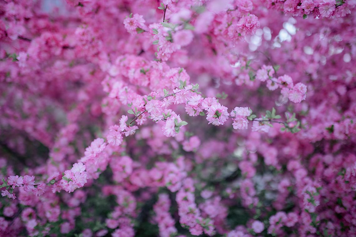 Стоковые цветы на заставку смартфона, цветочный фон для сайта и социальных сетей (фотограф Олег Мороз aka Tengyart)