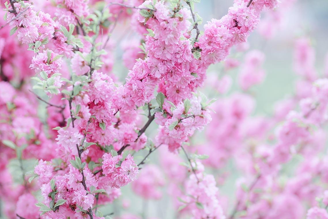 Стоковые цветочные фоны в нежных оттенках розового и салатового