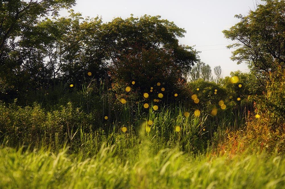 Фото со светлячками в лесу на заставку айфон в высоком и среднем разрешении