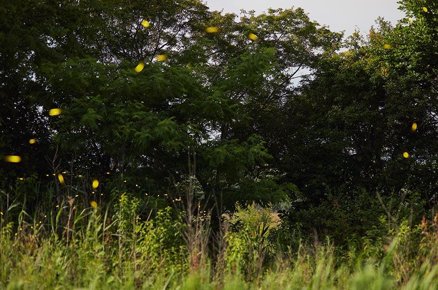 Полёт светляков в ночном лесу (подборка фото на заставку рабочего стола Windows)