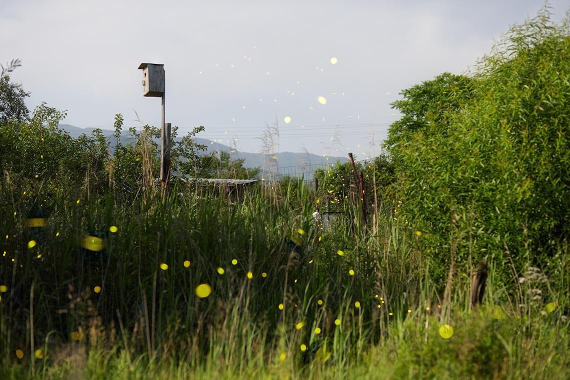 Светлячки фото для сайта и блога (стоковая подборка по бюджетной цене)