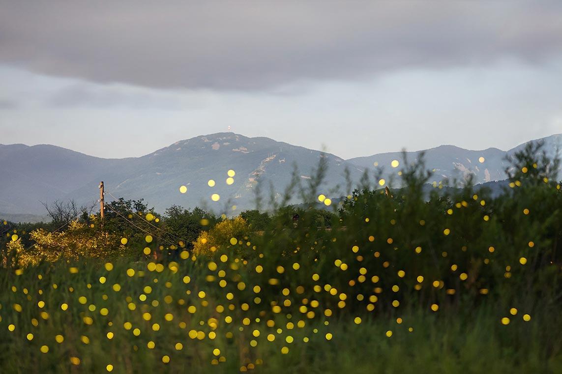 Стоковая подборка фото со светлячками в лесу - идеальная заставка смартфона андроид и айфон