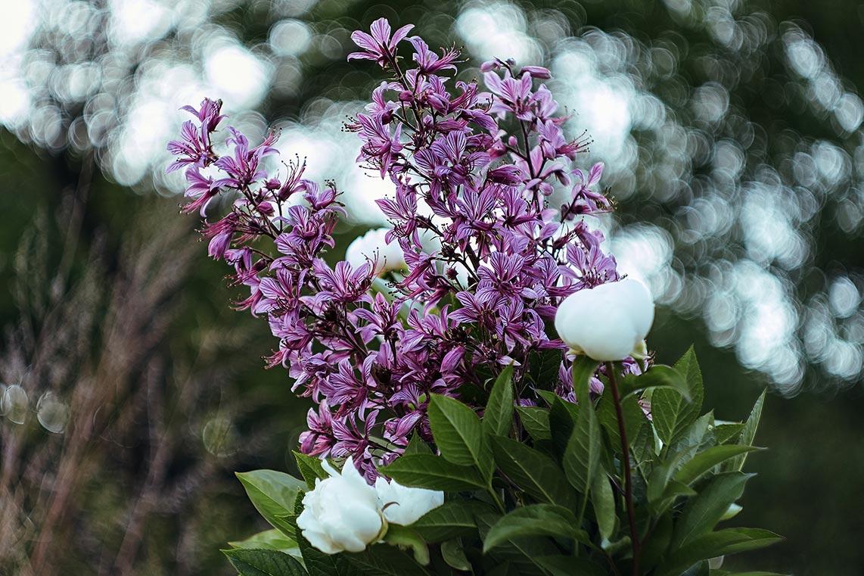 полевые цветы и боке (оформление к стихотворению рунный посох рассветного утра)