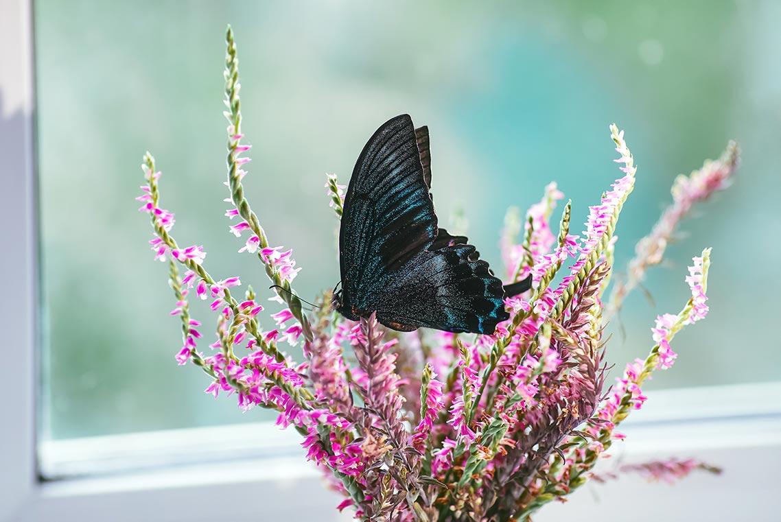 Домашнее фото махаона на цветке - образец снимка после шумоподавления в Adobe Camera Raw 12.3