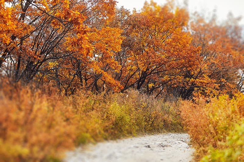 Когда начнётся осенний листопад в Приморье в 2020? Прогноз