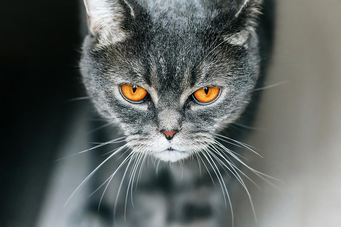 Мои страницы для подписки и котик для привлечения внимания