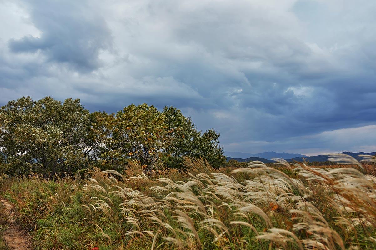 Стильный осенний пейзаж с мрачным закатным небом