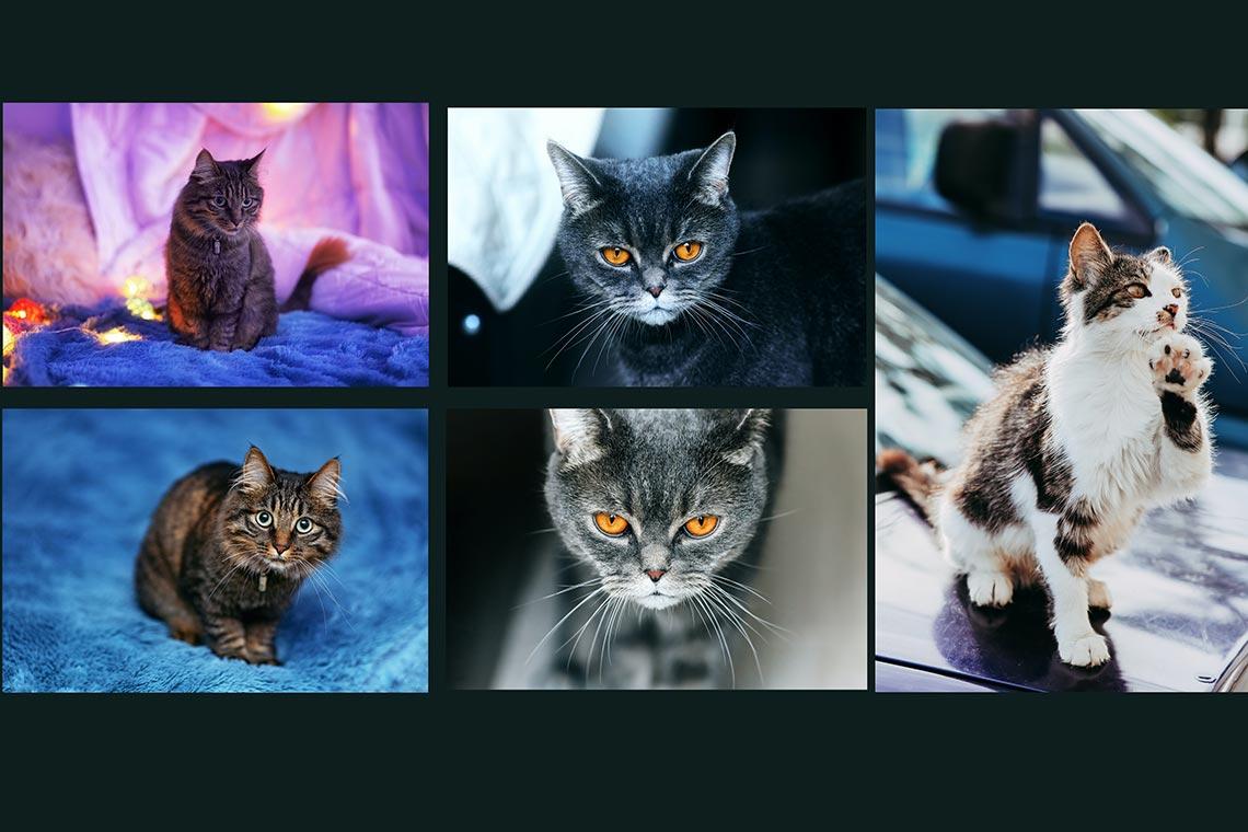 Бесплатные стоковые фото с котиками для рабочего стола, дизайна и соцсетей