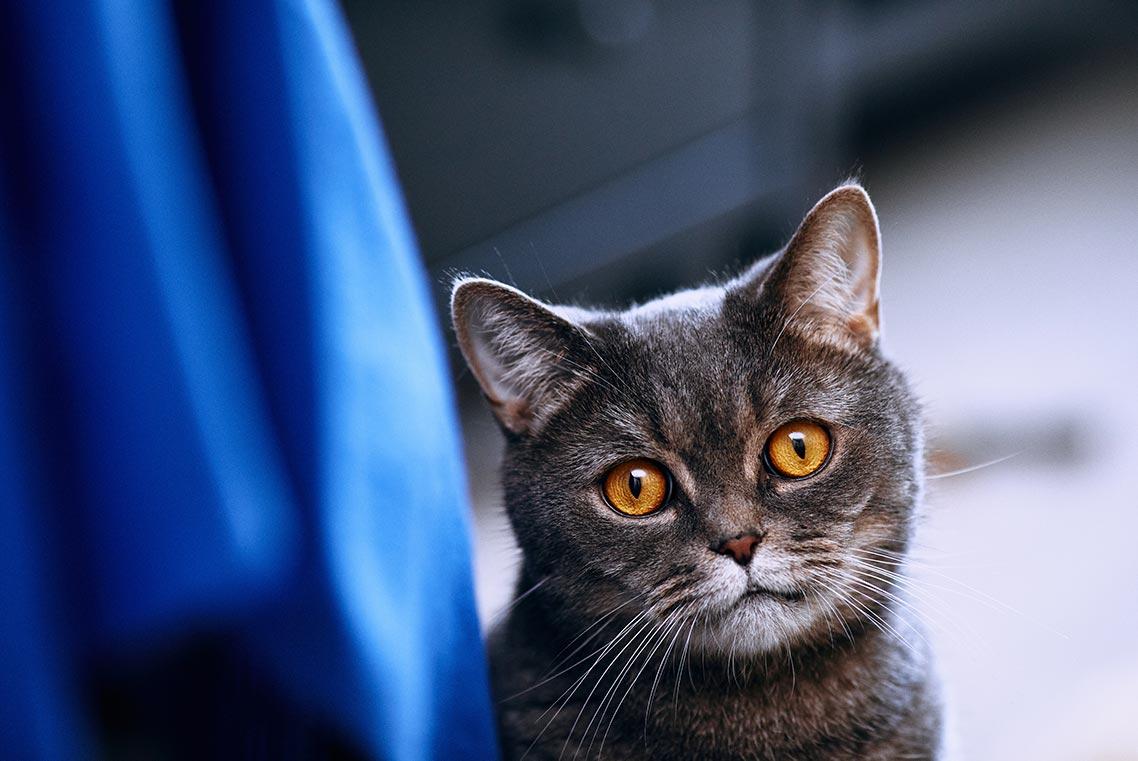 Плёночный стиль для инстаграм котиков в Capture One 20