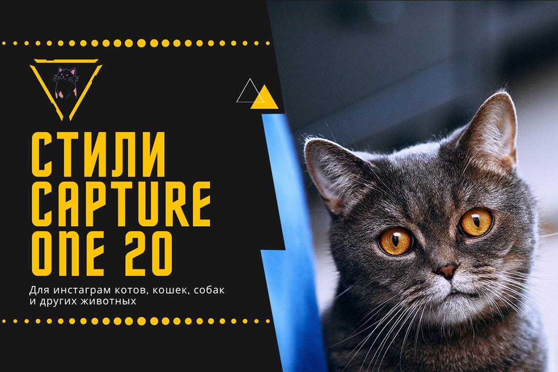 Стили Capture One 20 для инстаграм котов, кошек, собак и других животных (подборка из 8 пресетов)