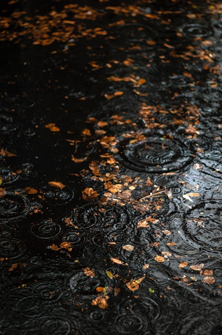 Осенние листья и круги от капель дождя в луже крупным планом