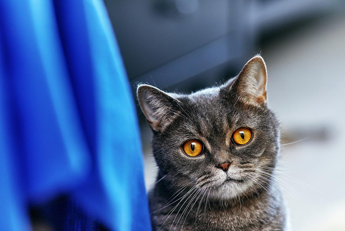 фото с котом с Unsplash бесплатно (и инструкция по использованию фото)