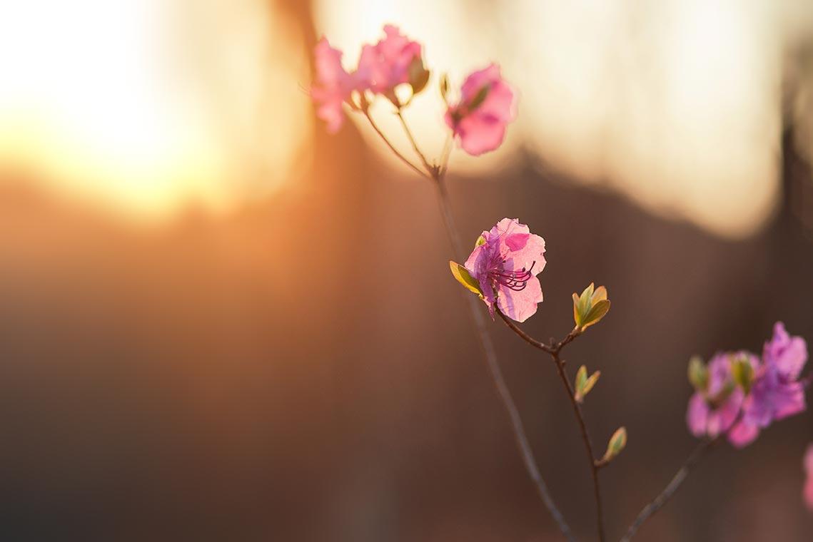 крутые абстрактные снимки с цветами на размытом фоне