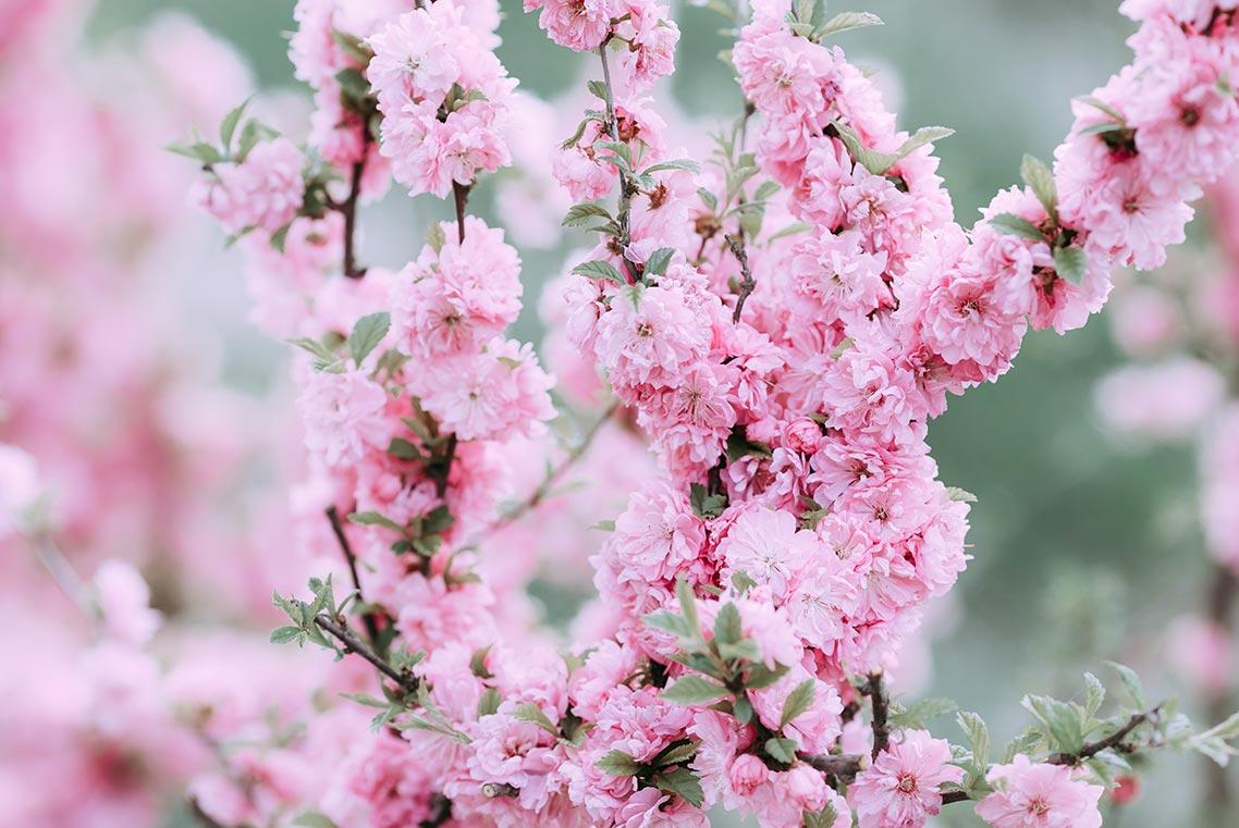 Стоковый фон с розовыми цветами для сайта и соцсетей