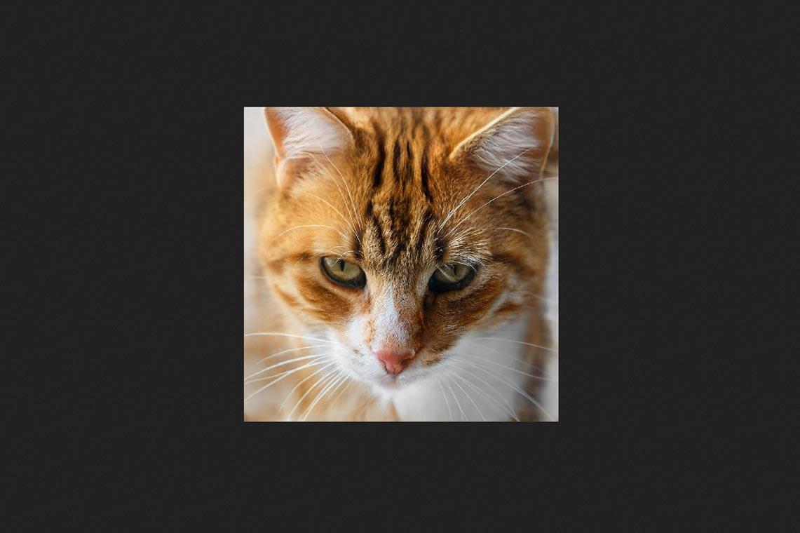 Онлайн генератор котиков