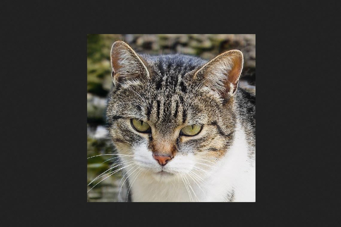 thiscatdoesnotexist - нейросеть для создания фото котиков онлайн