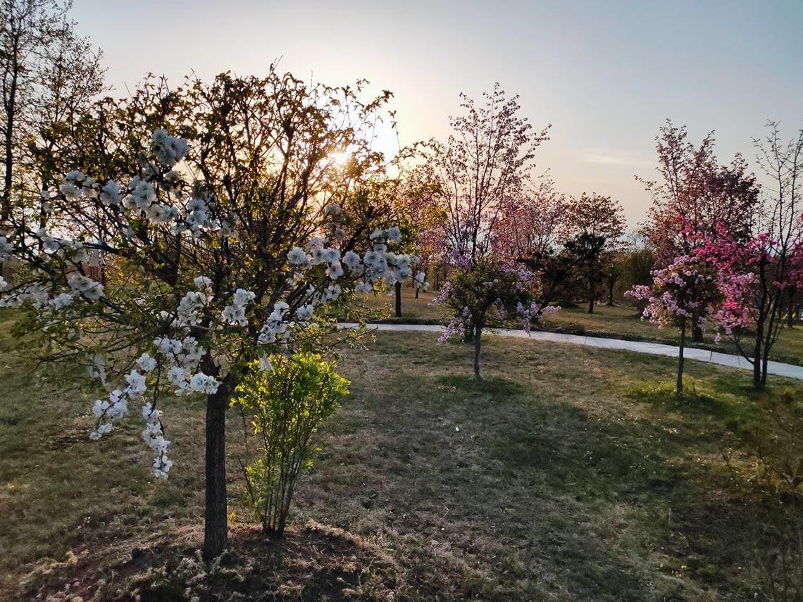 Цветущий сад в Находке