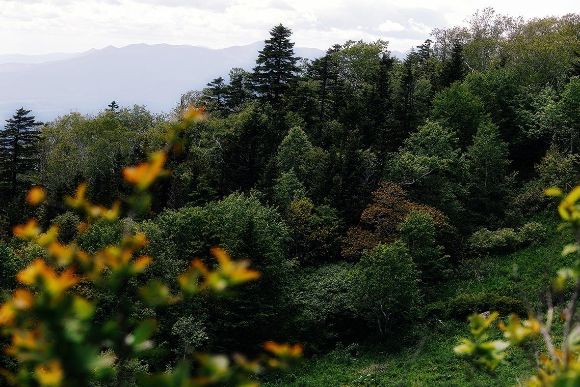 Лес на вершине горы Макарихи, 2021 год