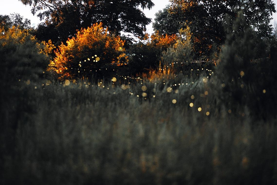 Летающие светлячки в лесу (фото крупным планом)