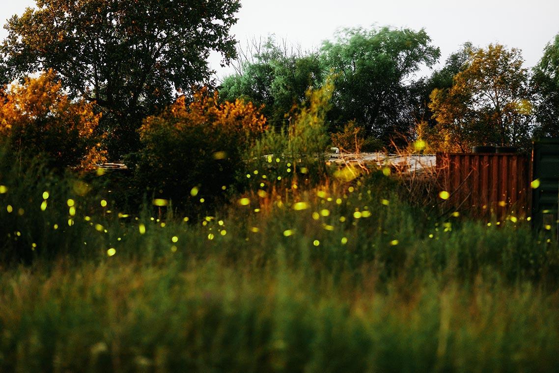 Лес и гаражи, где мерцают светлячки